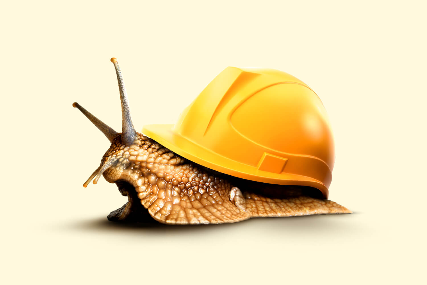 snail with hardhat